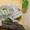 Продаю рептилий и экзотических животных в Перми #552550