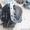 Коробка Отбора Мощности на Раздаточную Коробку а/м Газ-66 - Изображение #7, Объявление #1130594