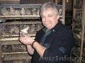 Профессиональное обучения по разведению Перепелиной птицы на практике.