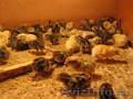 Обучения по разведению Перепелиной птицы на практике.