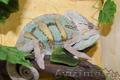 Продаю рептилий и экзотических животных в Перми